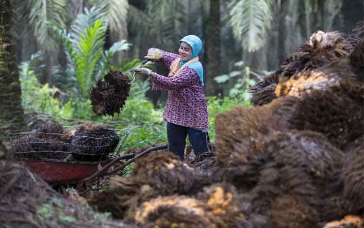 asian agri and the future of palm oil Its a case about the asian agri next projection of their business in the palm oil business its a case about the asian agri next projection of their business in the.
